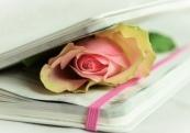 hand-book-plant-white-flower-petal-731137-pxhere.com